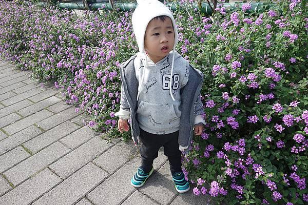 01-23 鶯歌永吉公園 (1).JPG