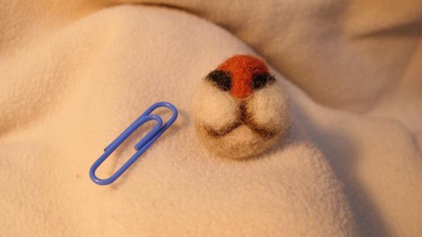 貓毛葡萄鼻