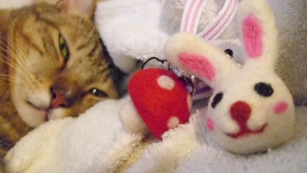 葡萄蘑菇與小兔