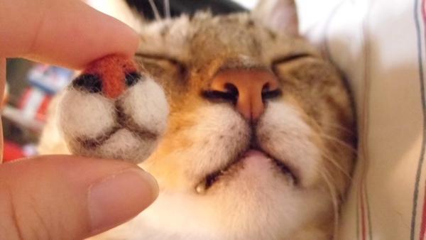 貓毛氈葡萄鼻2
