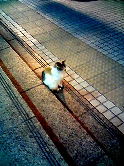 圓山站的貓老大01.jpg