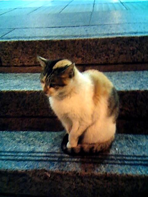 圓山站的貓老大04.jpg