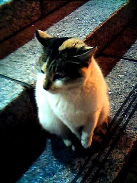 圓山站的貓老大02.jpg