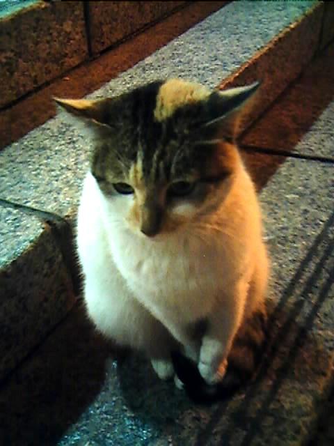 圓山站的貓老大03.jpg