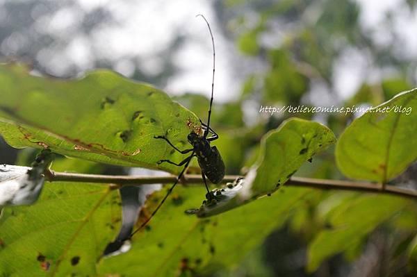 昆蟲 (3).JPG