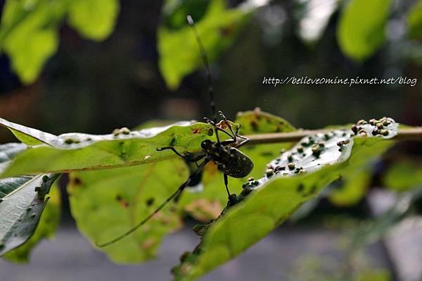 昆蟲 (4).JPG
