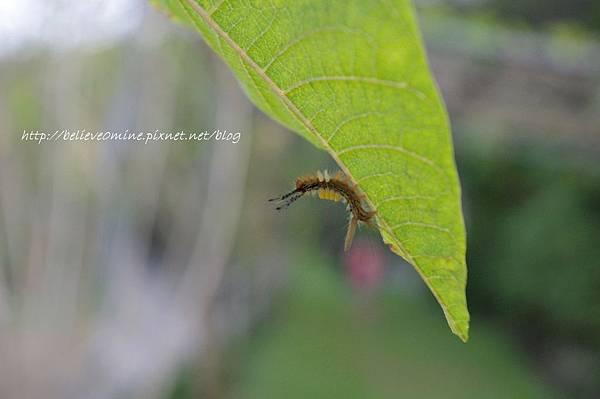 昆蟲 (7).JPG