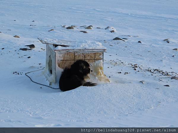 我見猶憐的像熊的狗