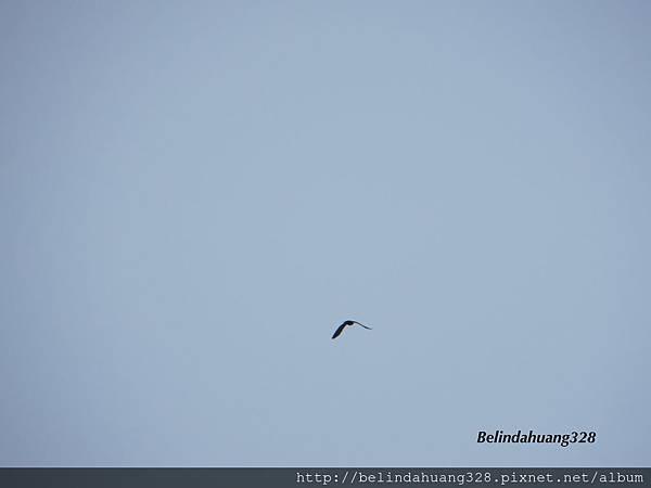 飛鳥靈動的輕盈