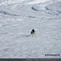 北極圈的雀鳥1