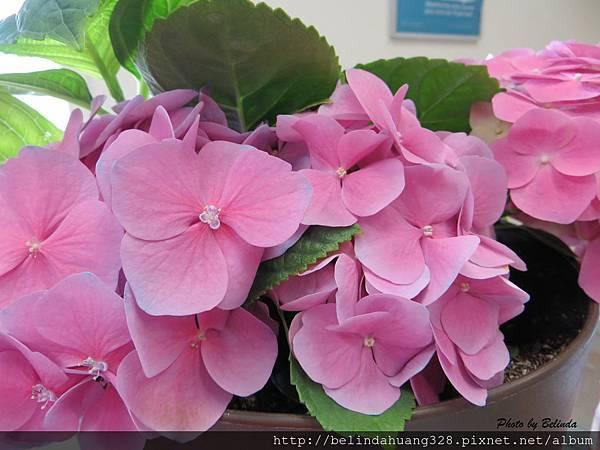 這個社區的郵局室內的夏日花兒