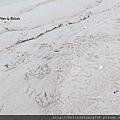 極地海邊海鳥的足跡