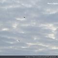北極圈的天空20131104