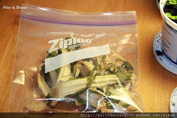 菜乾自製第五天收成裝袋