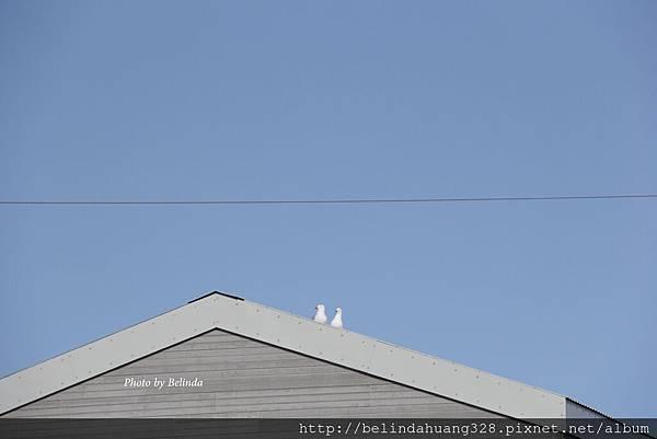 20140611北極圈地帶銀鷗