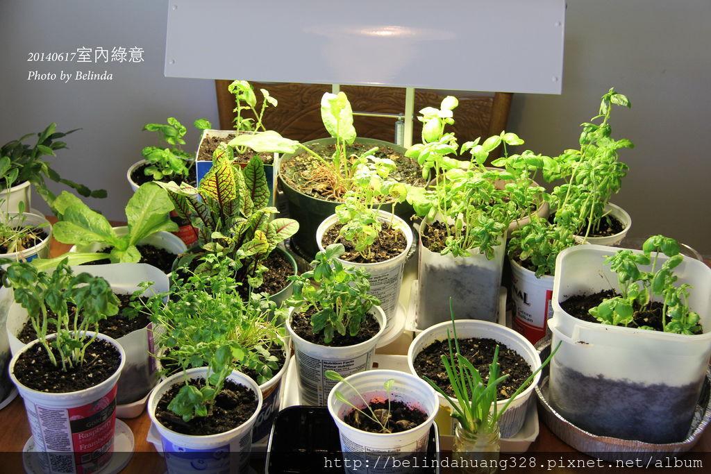 20140617室內盆栽