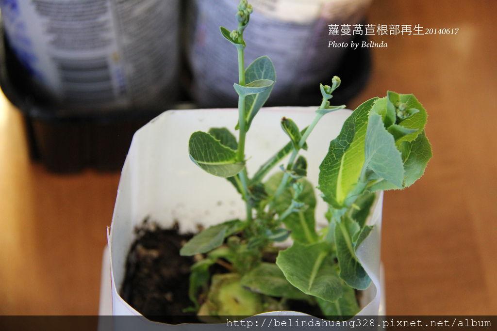 20140617室內盆栽~5