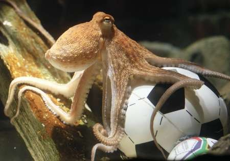 paul octopus.jpg