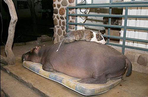 pet-hippo.jpg