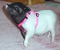 piglets_banditcarpet.jpg