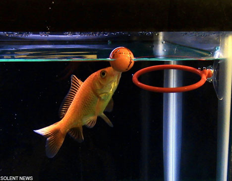the smart fish Einstein play basket ball.jpg