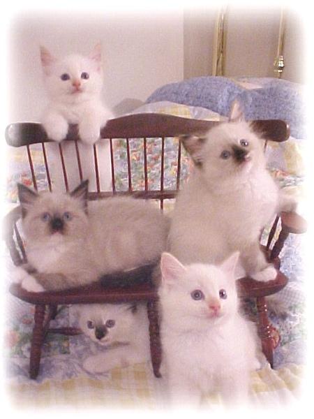 5kittycats.jpg