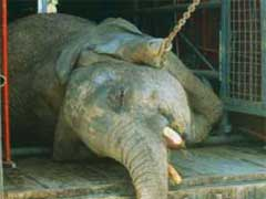 Circuses.com The Circus is No Place for Animal Abuse.jpg
