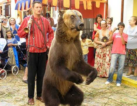 dancing-bear.jpg