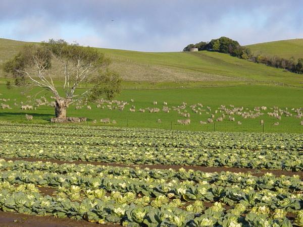 biodynamic farm.jpg