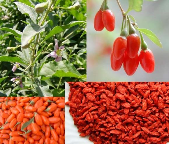 gogi-berries.jpg