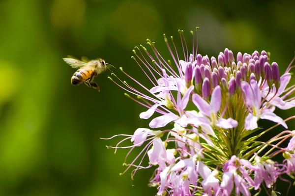 organic flowers bugs 5.jpg
