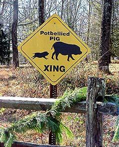 Pig Xing.jpg