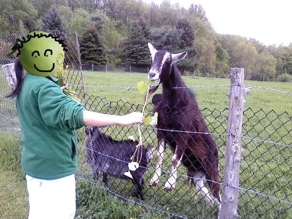 goat8.jpg