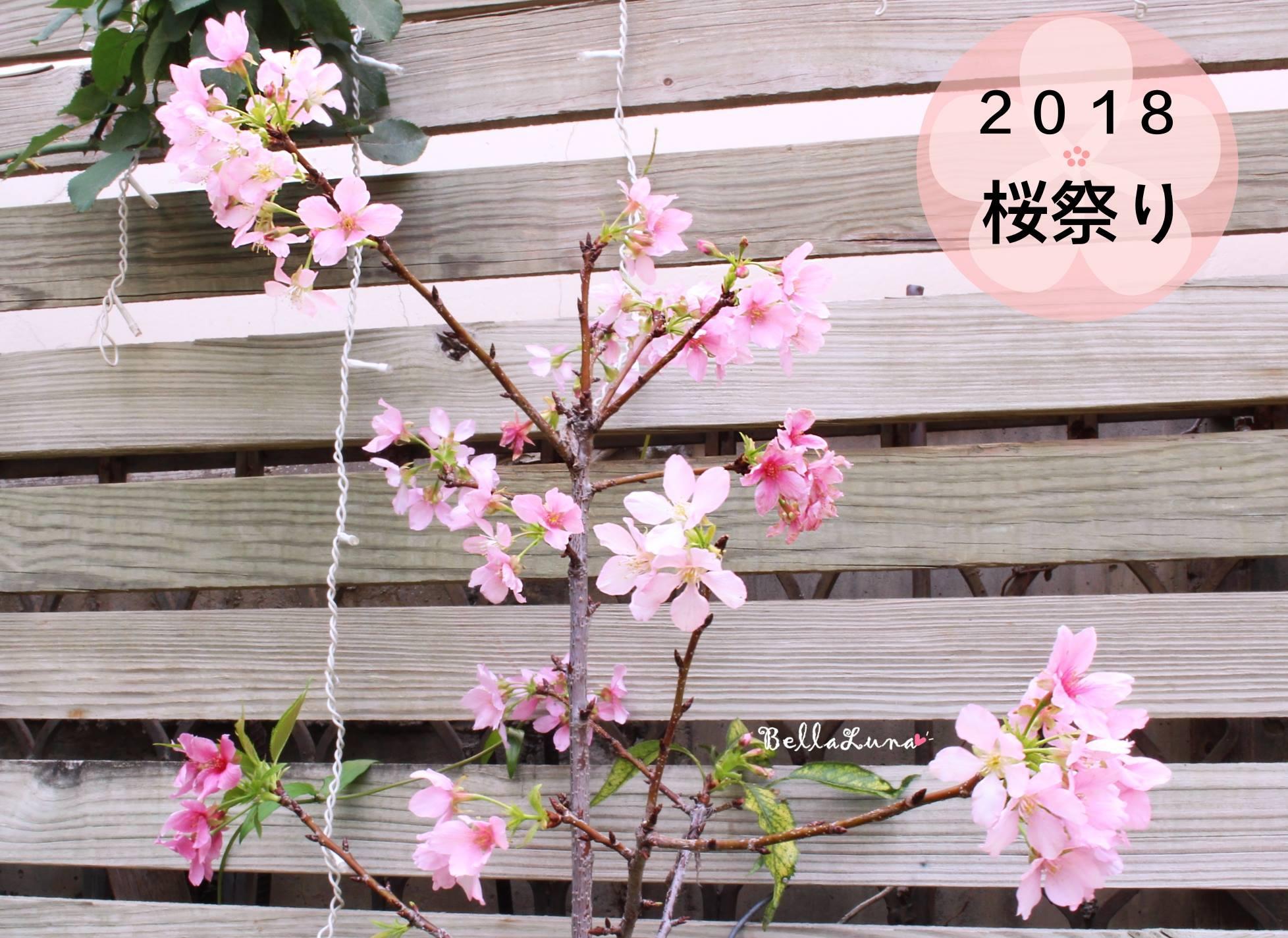 櫻花 3.jpg