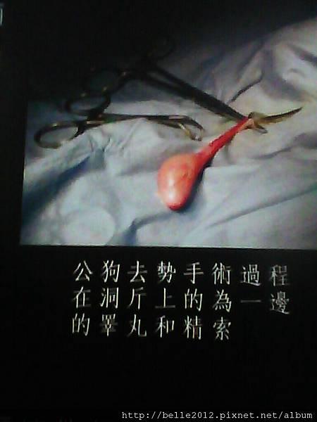 image20110603_124154.jpg