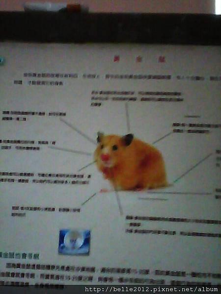 image20110603_124917.jpg