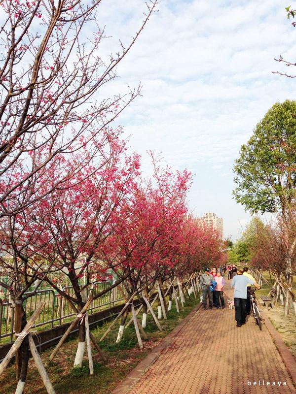 2015.02.22 台中市太平區麗園公園