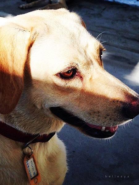[狗] 拉拉妹妹