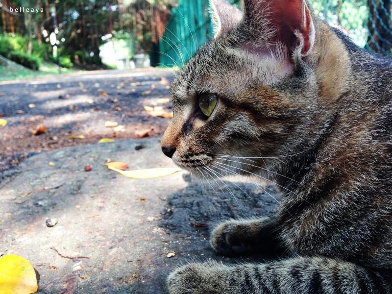 [貓] 小虎斑妹妹