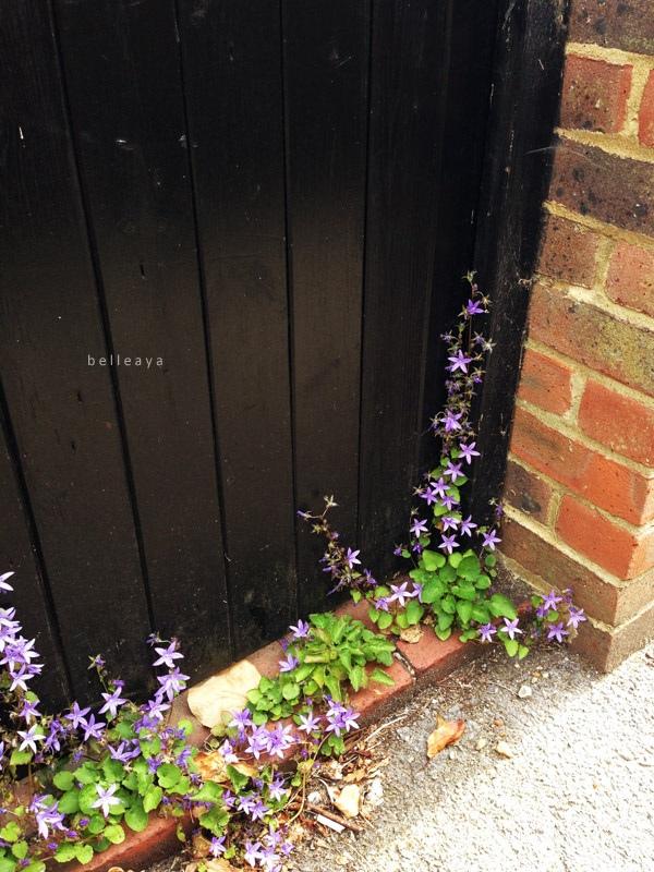[英國] 布萊頓小巷: Vine Place