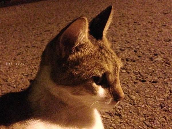【交大貓咪】大聲公