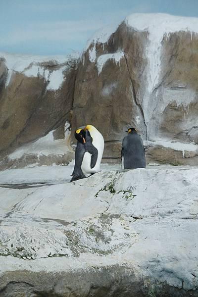 企鵝都不下水ㄋㄟ