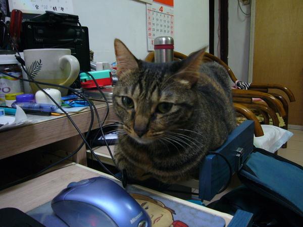 寶寶的愛貓:菲菲