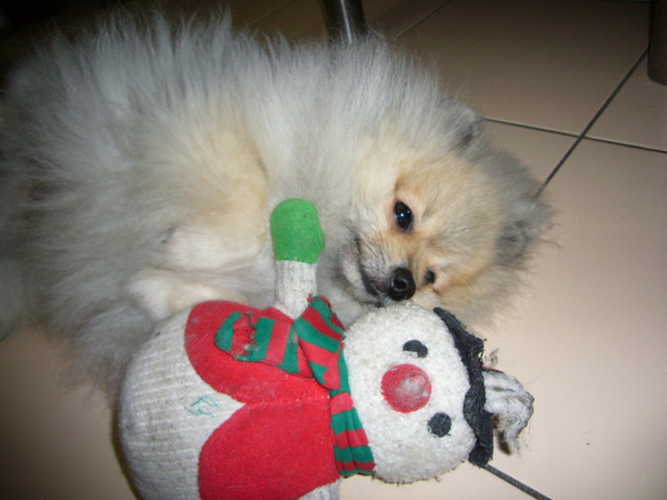熊與小雪人老婆準備就寢