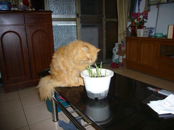 吃貓草的妞