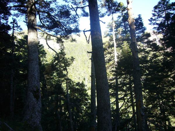 黑森林有著神秘的氣氛,小精靈怎麼還不出來