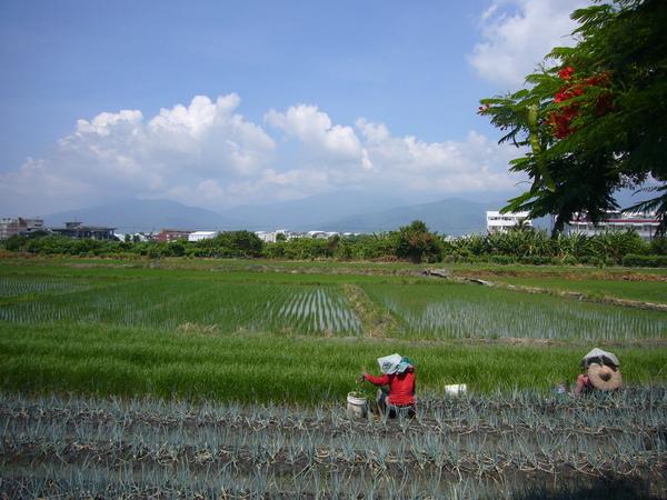 美好的農田與農民