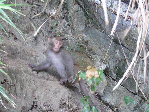 好多的猴子