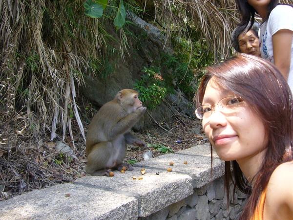 拼命吃龍眼的猴子