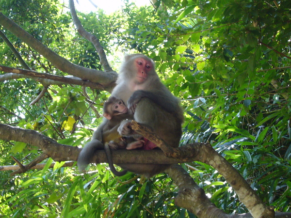 母猴子與小猴子